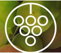 desert Vineyard Church Logo